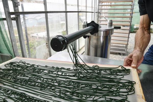 Spaghettis de spiruline fraiche avant séchage